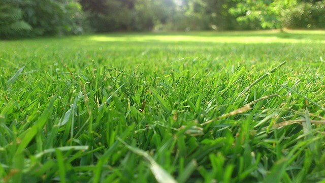 Lawn Maintenance Service : Why hire a lawn care service